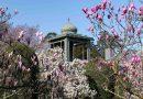 Wilhelma Stuttgart: Magnolienblüte bleibt dieses Jahr ohne Gäste eine stille Freude
