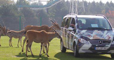Stukenbrock: Sonder-Auto-Safari in Corona-Zeiten! 20 Euro pro Fahrzeug!